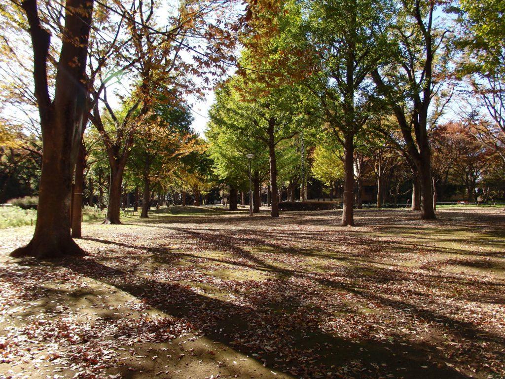 落ち葉と木々