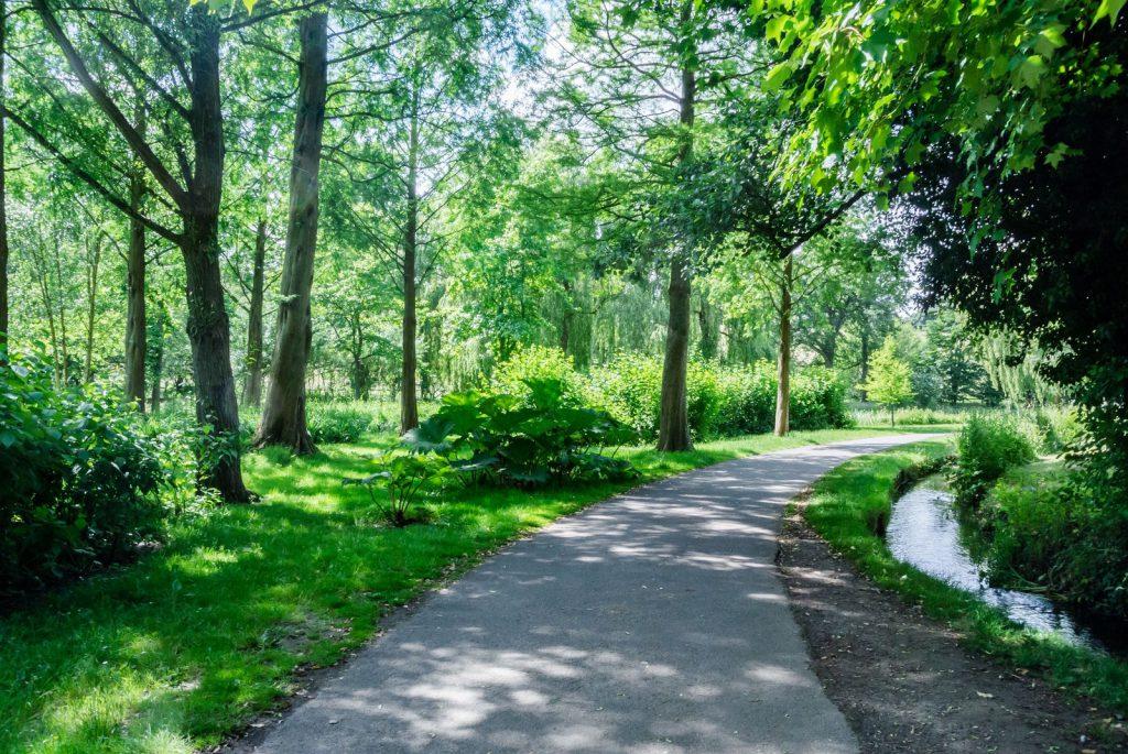 森林の中にある道路