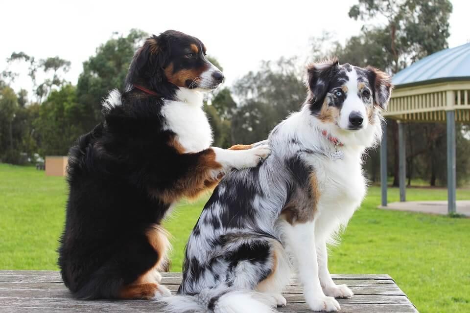 じゃれあう犬2匹