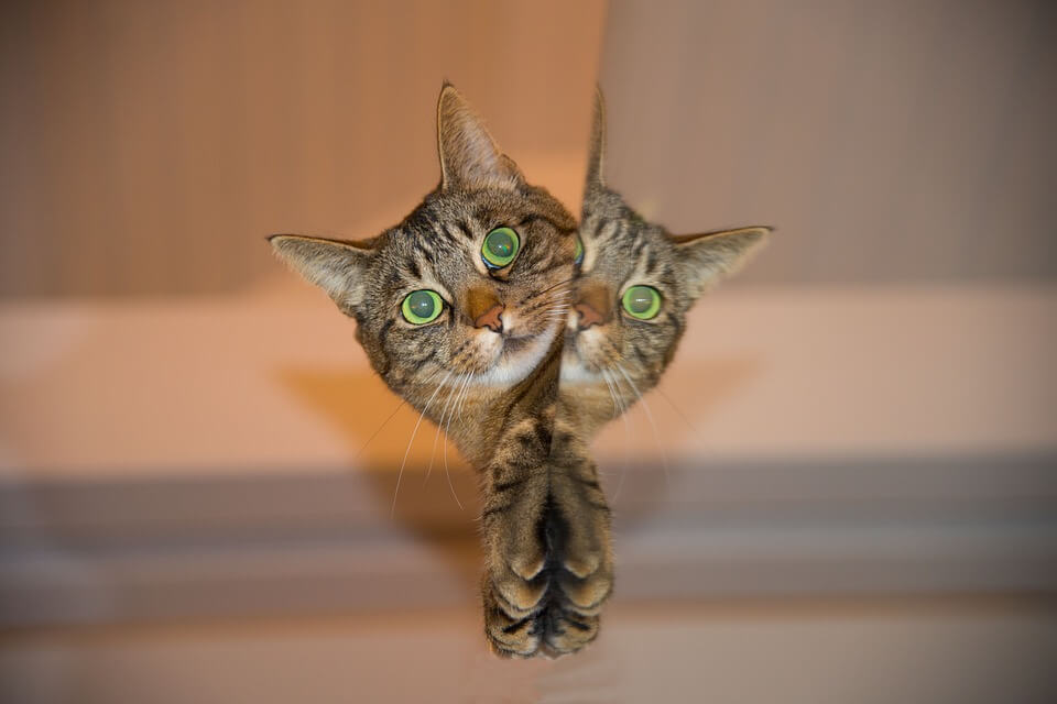 ひょこっと顔を出す猫