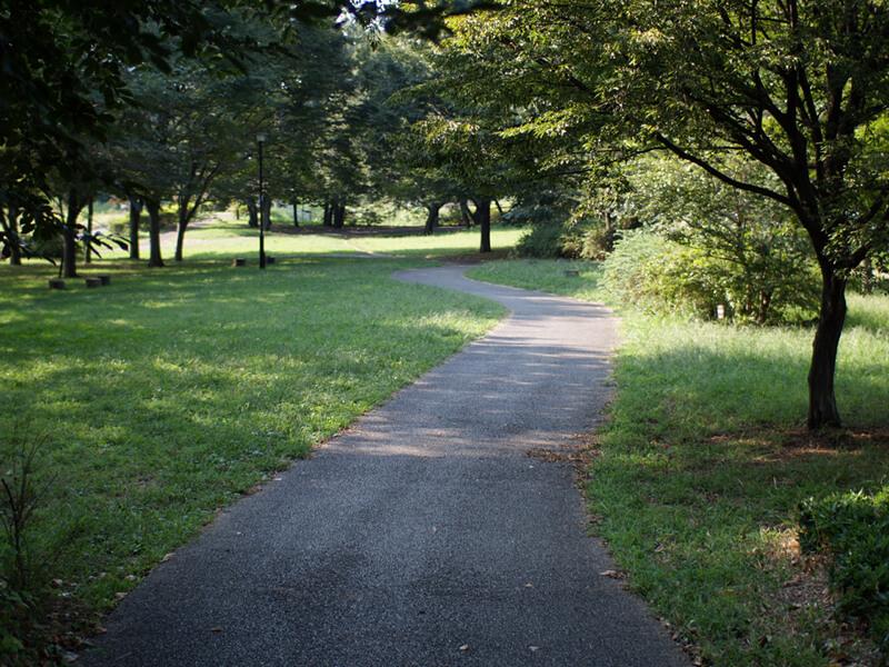 緑に囲まれた小道