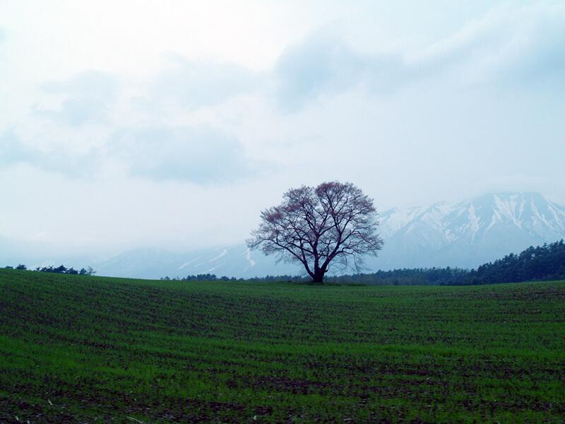 一面に広がる緑と木々