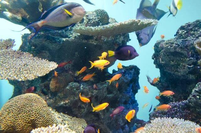 水族館の水槽で泳ぐ魚たち