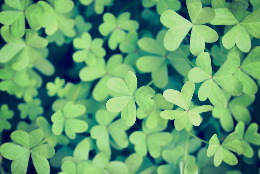 クローバーによく似たハート型の葉っぱたち