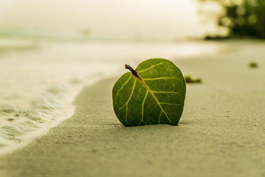 砂浜に落ちている葉