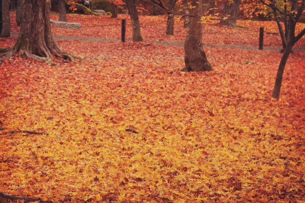 赤からオレンジに移りゆく落ち葉のグラデーション