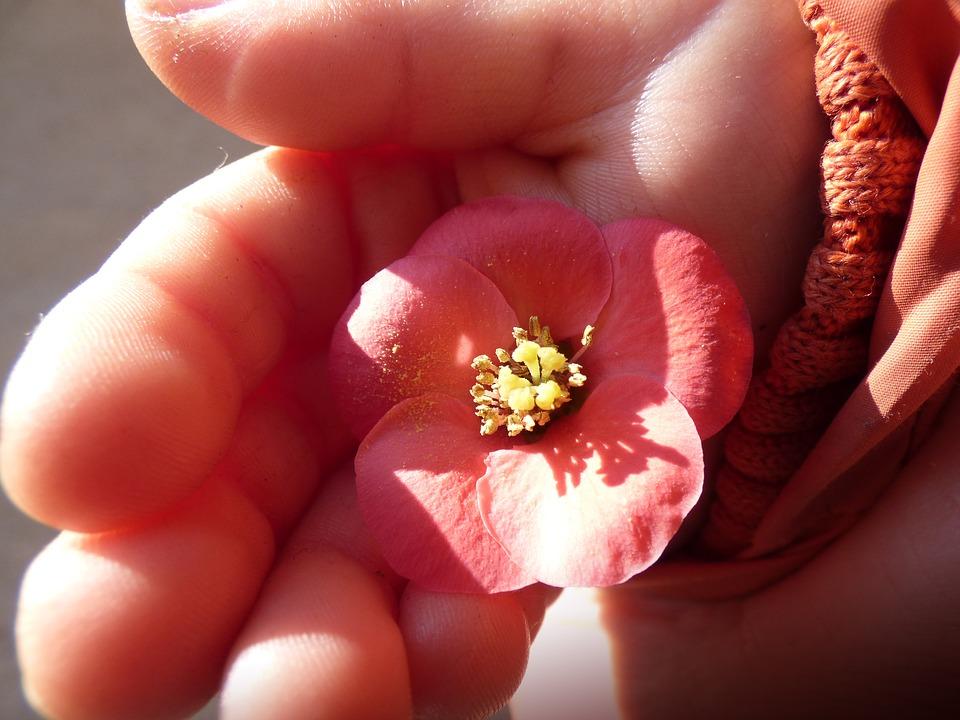 掌の上の赤い花