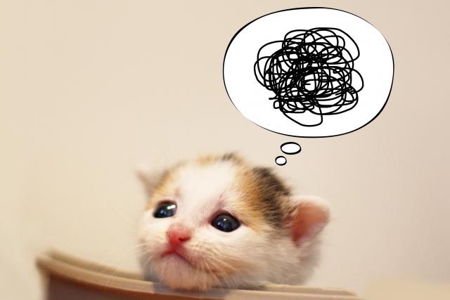 もやもやした猫