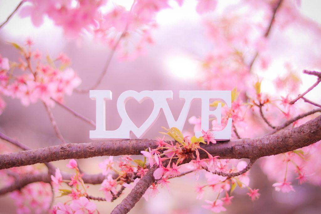 桜の木の上に置かれて春の訪れを感じさせるLOVEプレート