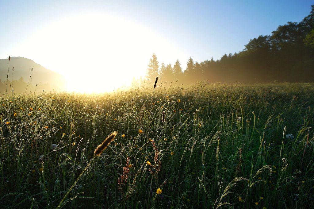 草原と日の出