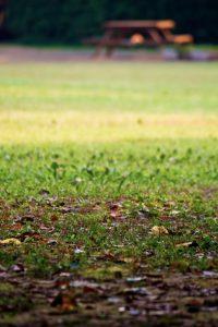 落ち葉と公園のベンチ