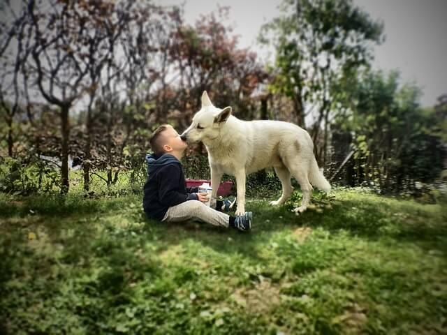 犬と庭で戯れる子供