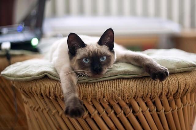 ソファーでぐったりする猫
