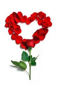 ハート型のバラの花びら