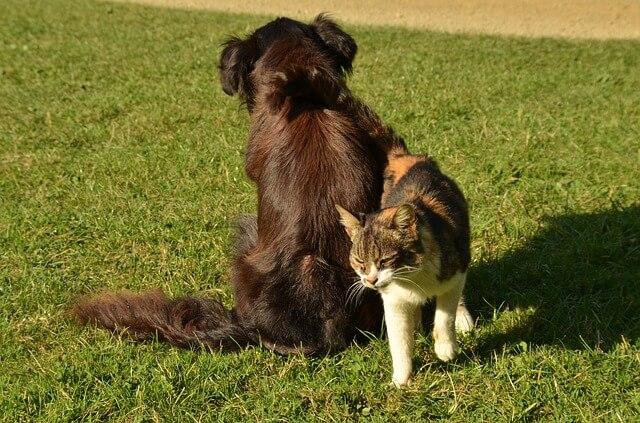 犬のもとを離れる猫