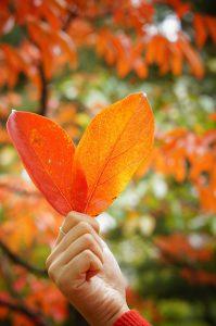 紅葉したハート型の落ち葉