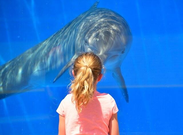 イルカと対面する女性