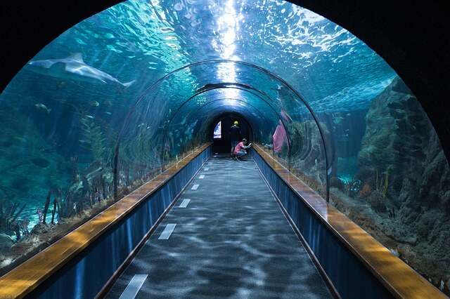 水族館のサメのトンネル