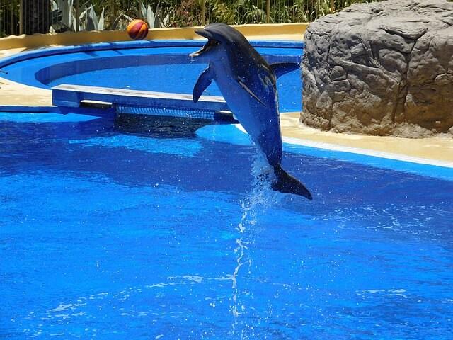 水族館にいるイルカのショー