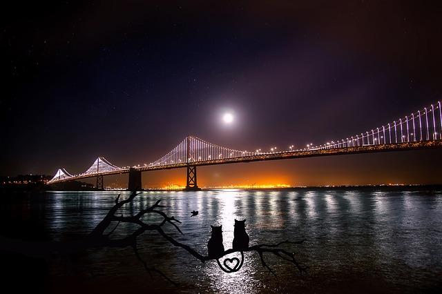 月光を浴びる猫