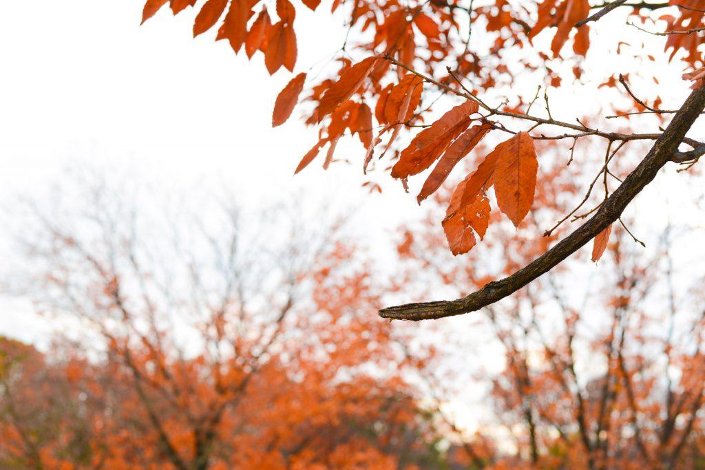 別れを意識する紅葉の季節
