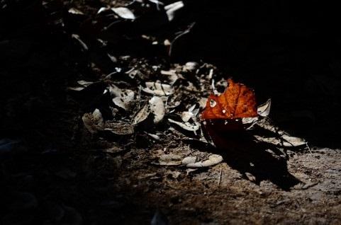 枯葉のような別れ