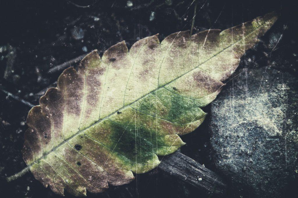 別れを想起させる葉