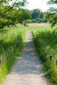 自然豊かな歩道