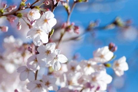 片思いの季節の春