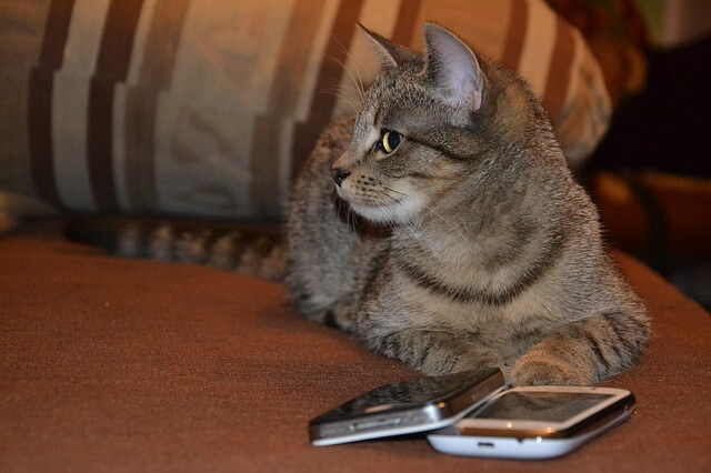 そっぽを見てスルーする猫とスマホ