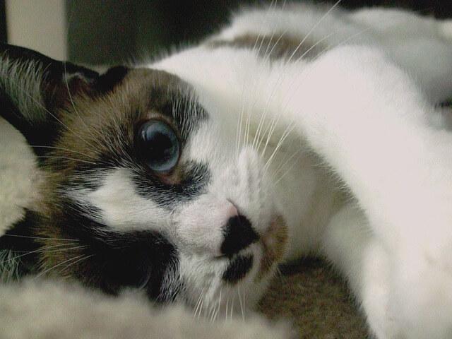 まったりした猫