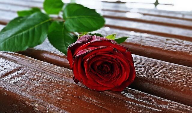元彼に渡された赤いバラ