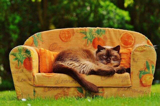 ソファーでリラックスする猫