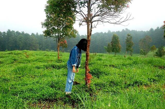木にに頭を打ち付け悩む女性