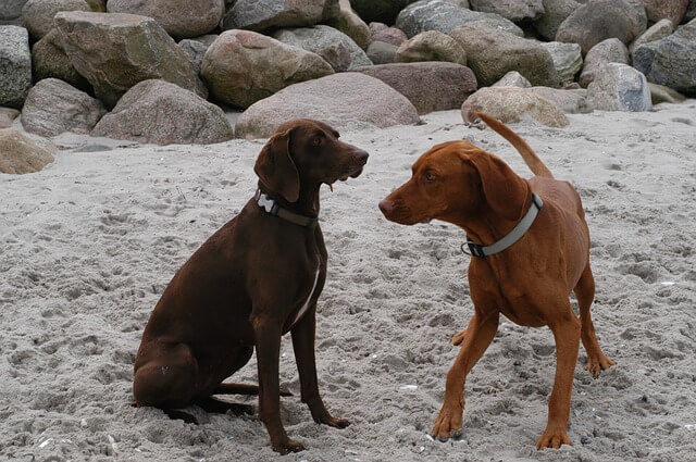 会釈する犬