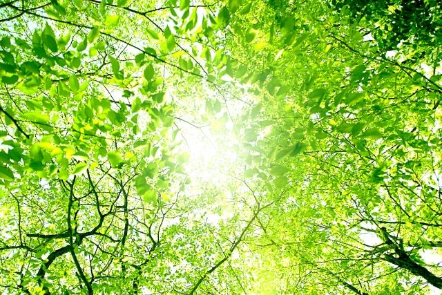 癒し効果のある緑色