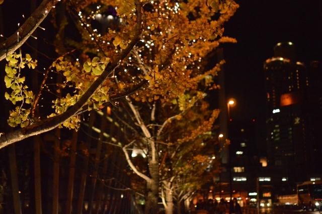 イルミネーションの光る夜道