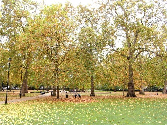 公園の並木道