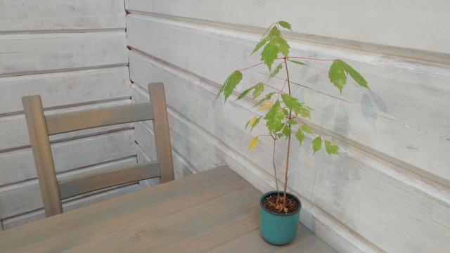 観葉植物が置かれた部屋