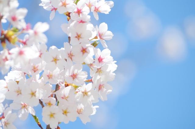 桜の舞う卒業シーズン