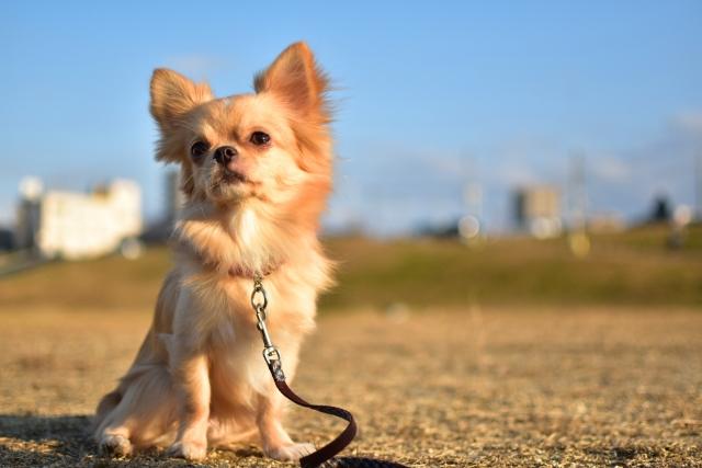 可愛いペットの犬